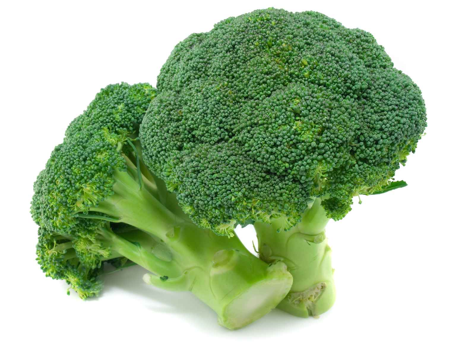 Organic Broccoli Bunch (1 lb aprox)