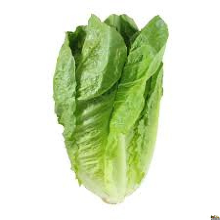 Romaine Lettuce - 1 Count