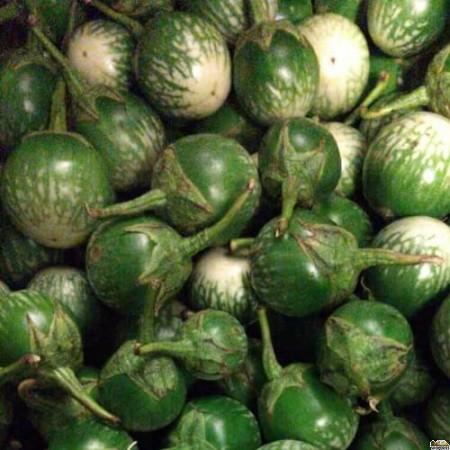 Green Thai Eggplant - 1 Lb