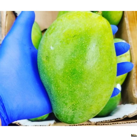 Large Sweet Mallika /Neelum /Dasheri Mangoes - 1 Count