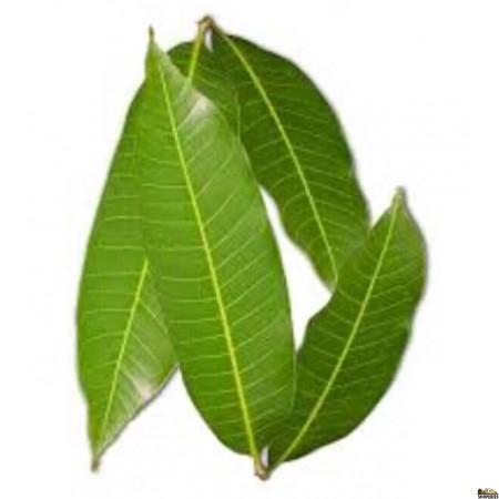 Mango Leaf - 5 leaves