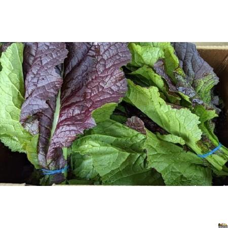 Organically Grown Mustard Red/greens - 1 Bunch