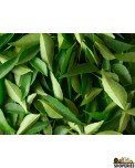 Curry Leaves - 1 pack