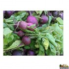 Organically Grown Round Radish With Leaves- 1 Bunch