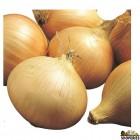 Organic Sweet Walla Walla Onions - 3 Lb