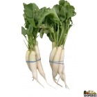 Organically Grown Baby Daikon/radish - 1 Lb