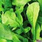 Argula Spinach - 1 lb