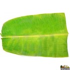 Banana Leaf Frozen 16 oz