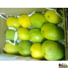 Banganapalle Mangoes - 1 Large Box (Pre-order)
