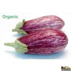 Organic Graffiti eggplant  - 1 lb