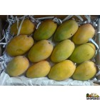 Kesar Mangoes - 1 Large Box