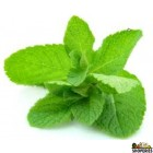 Mint Leaves - 1 bunch