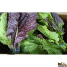 Organically Grown Red Mustard Greens - 1 Bunch