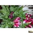 Organically Grown Radish With Leaves - 1 Bunch