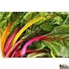 Organically Grown Rainbow Chard - 1 Lb