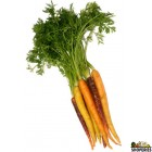 Organic Rainbow Carrots - 1  bunch