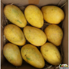 Rasalu Mangoes - 1 Large Box
