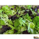 Organically Grown Salad Green - 8 Oz
