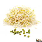 Sprouted Moong Bean Beans - 12 Oz