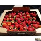 Organically Grown Strawberries - 1 Lb
