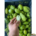 Baby Green Raw Mango - 0.5 lb
