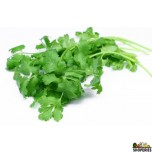 Organic Cilantro Leaves - (1 bunch)