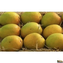 Alphonso Mangoes 1 Large Box (Pre-Order)