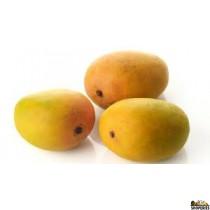 Kesar Mangoes - 3 count