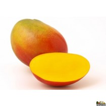 Kent Mangoes - 1 Count (Big)