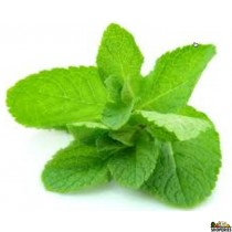 Organic Mint 1 Bunch