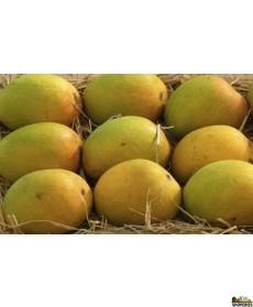 Alphonso Mangoes 1 Large Box