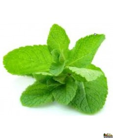 Organic Mint - 1 bunch