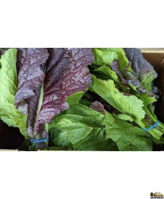 Organically Grown Mustard Red/greens - 1 Bunch