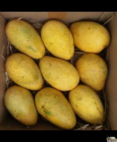Rasalu Mangoes - 1 Large Box