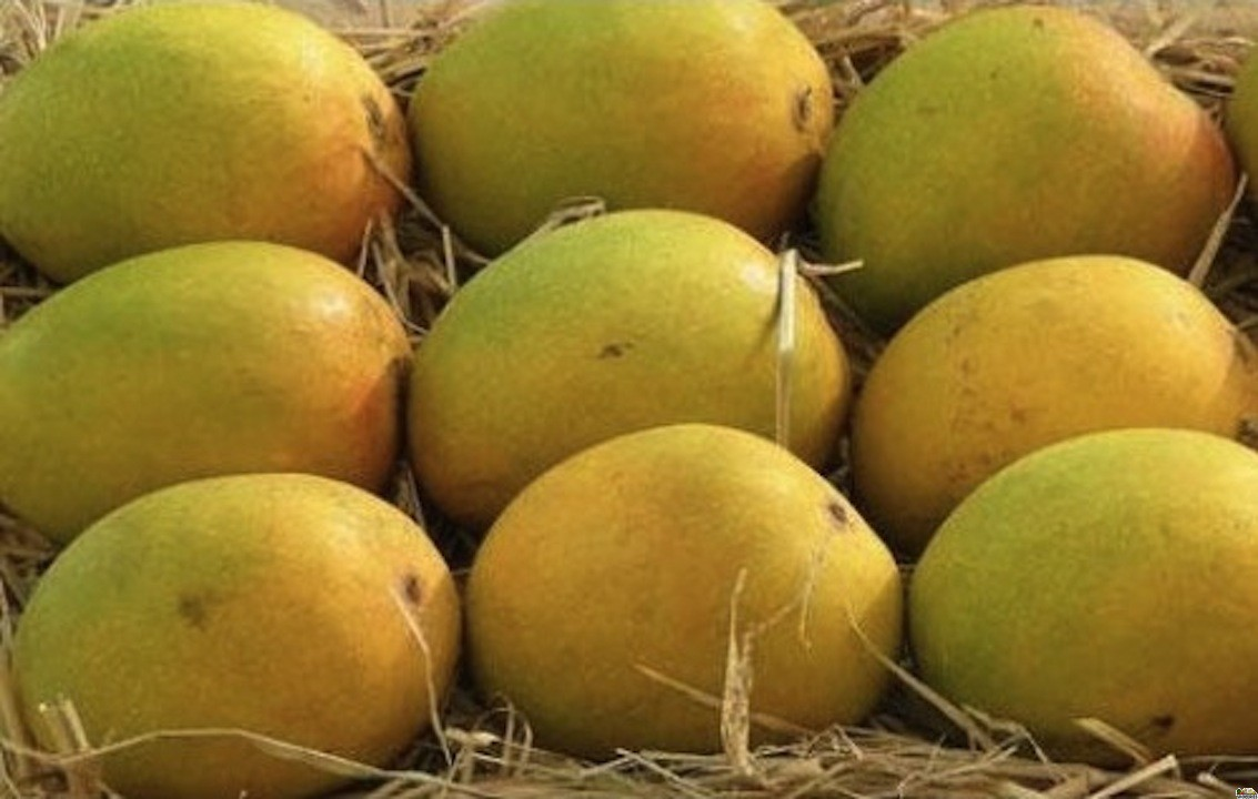 Alphonso Mangoes 1 Large Box (Pre order)