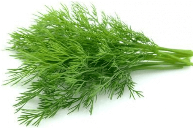 Dill Leaves - 1 Bunch (0.5 lb)