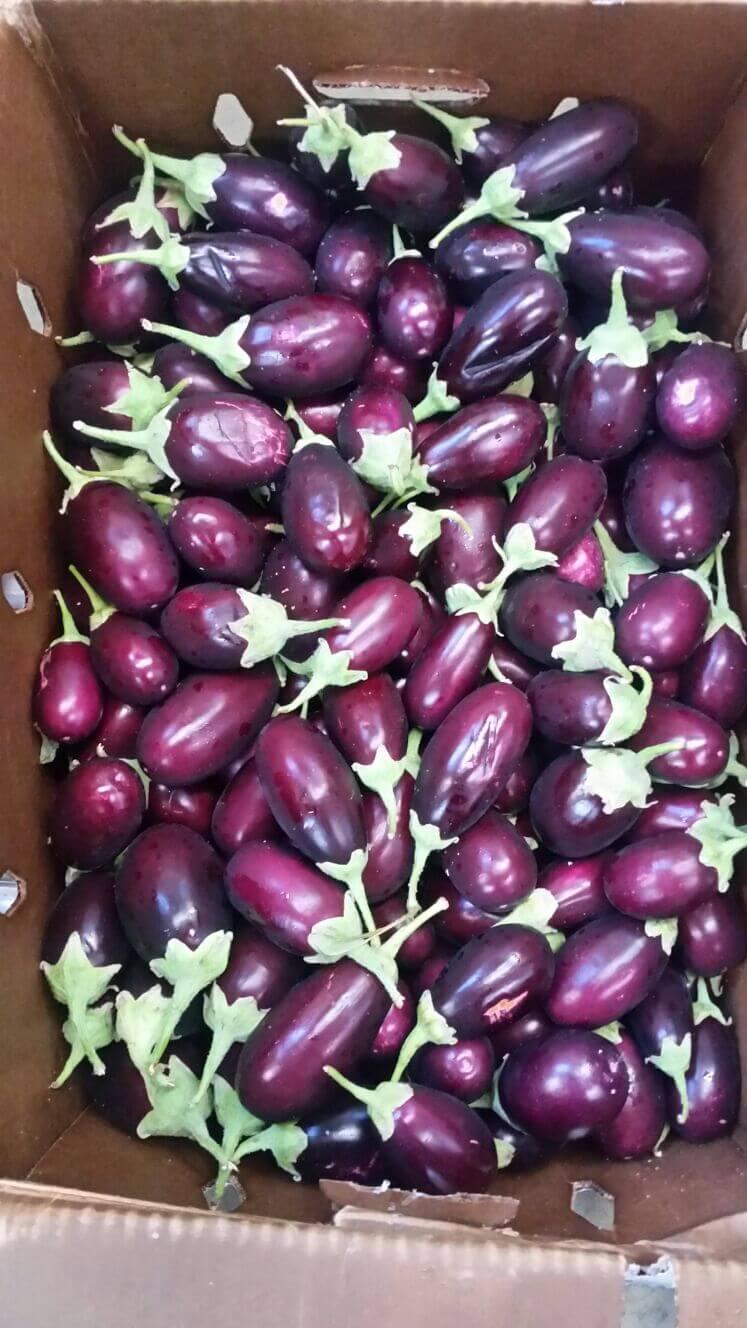 Small Indian Baby eggplant / Brinjal - 1 lb