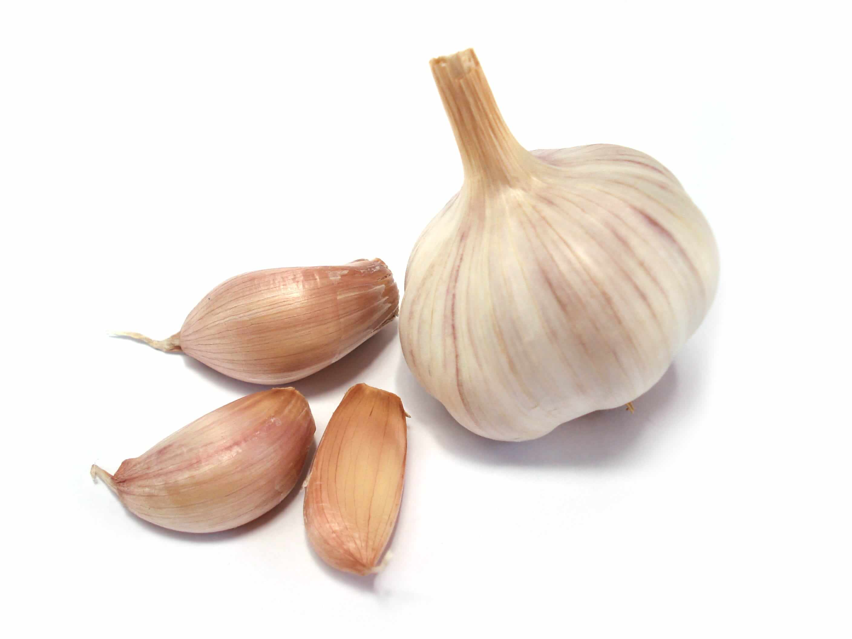 Garlic (5 count)