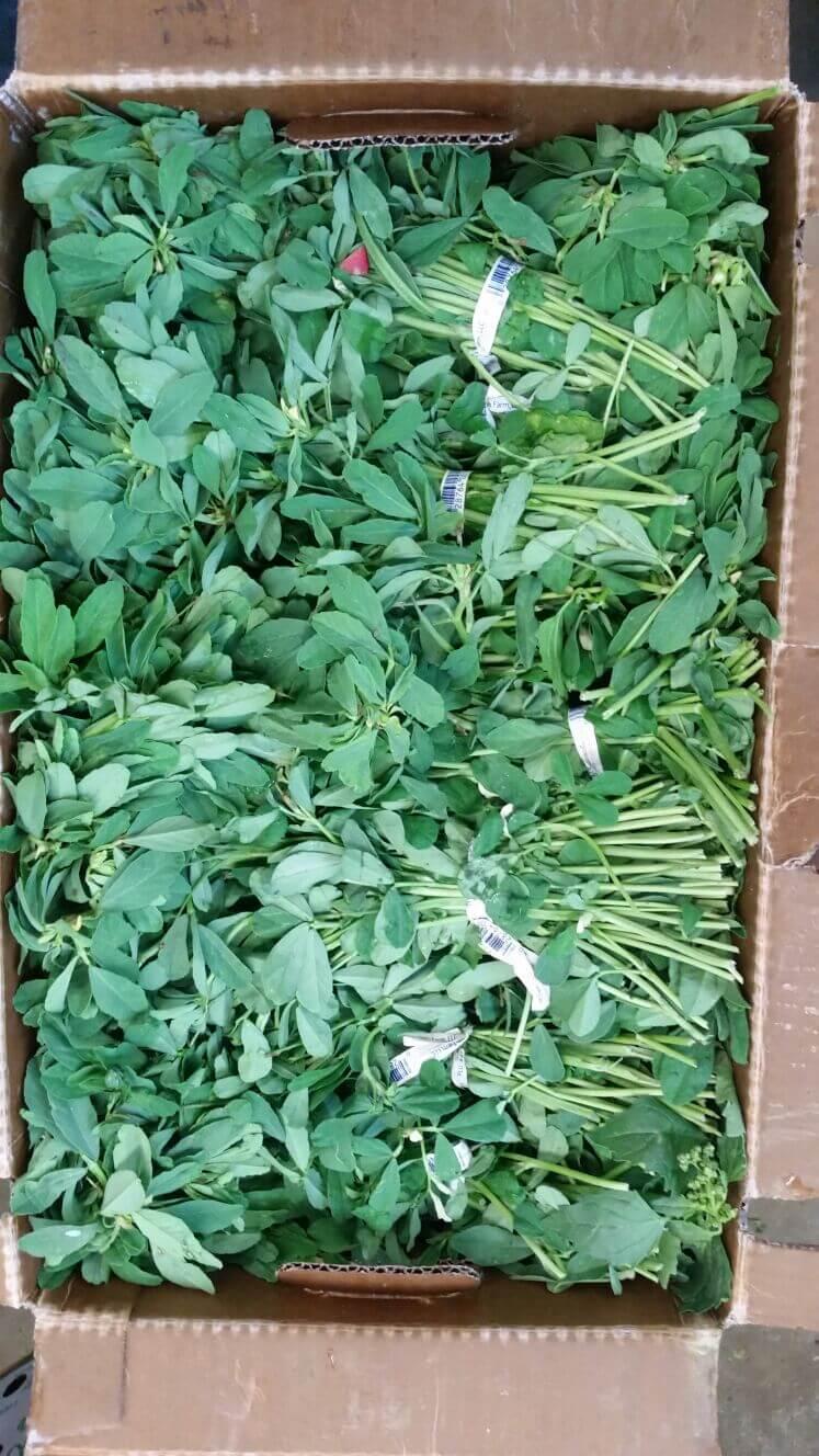 Fenu Greek/Methi Leaves - 1 Bunch