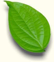 Paan Betel Leaves (10 Count)